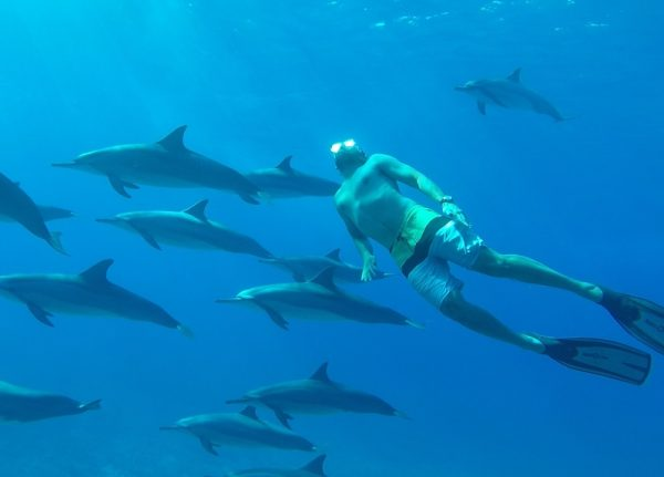 Man swimming with dolphins west coast of Mauritius