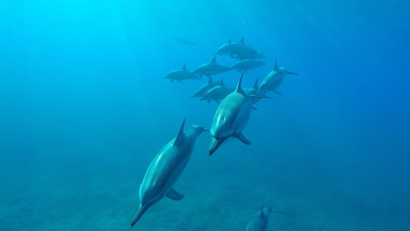 Swim with dolphins experience